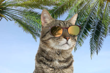 Cute tabby cat wearing sunglasses and blue sky with palms on background 版權商用圖片