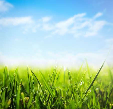 Green grass and blue sky on sunny day, closeup Foto de archivo