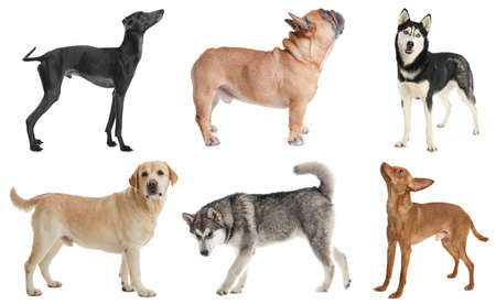 Set of different dogs on white background Foto de archivo