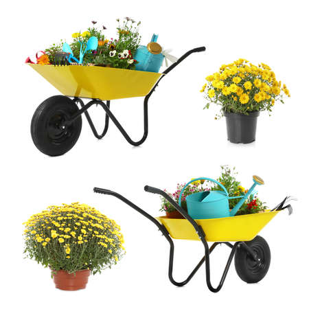 Set with different gardening tools, wheelbarrows and plants on white background