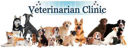 Collage with different cute pets and text Veterinarian Clinic on white background. Banner design