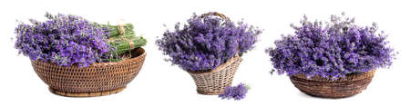 Set of fresh lavender flowers in wicker baskets on white background. Banner design