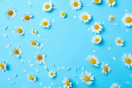 Flat lay composition with fresh chamomiles on light blue background. Space for text Stock fotó