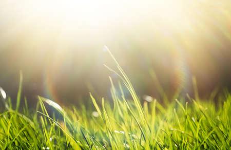 Lush green grass on sunny day, closeup Archivio Fotografico