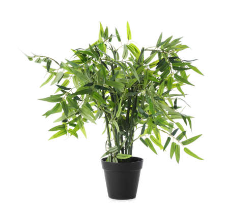 Beautiful artificial plant in flower pot isolated on white Imagens