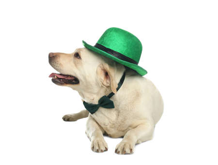 Labrador retriever with leprechaun hat and bow tie on white background. St. Patrick's day