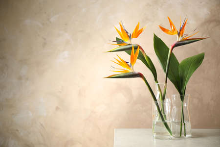 Bird of Paradise tropical flowers on table near beige wall, space for text