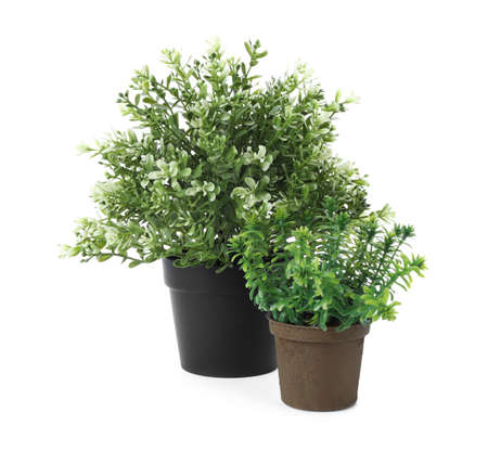 Beautiful artificial plants in flower pots isolated on white