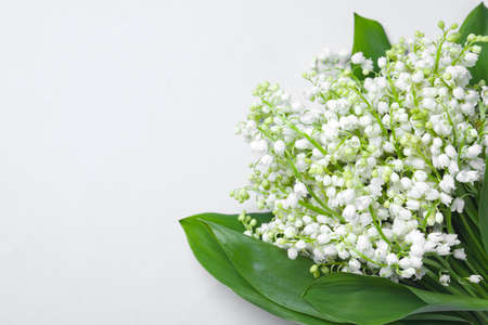 Beautiful lily of the valley flowers on light grey background. Space for text Stockfoto
