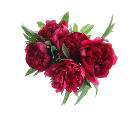 Bouquet of beautiful red peonies isolated on white