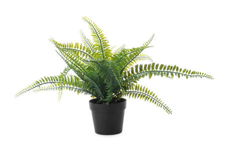 Beautiful artificial plant in flower pot isolated on white