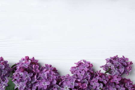 Beautiful lilac blossom on white wooden background, flat lay. Space for text 스톡 콘텐츠