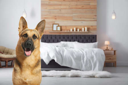 Cute dog in room, space for text. Pet friendly hotel