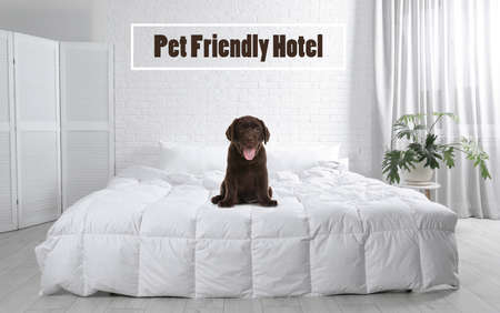 Cute puppy on bed in room. Pet friendly hotel