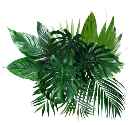 Different fresh tropical leaves on white background Archivio Fotografico