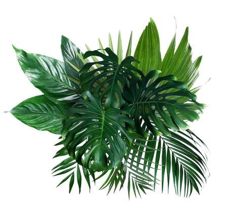 Different fresh tropical leaves on white background Reklamní fotografie