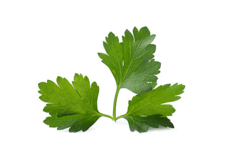 Aromatic fresh green parsley isolated on white Stock fotó
