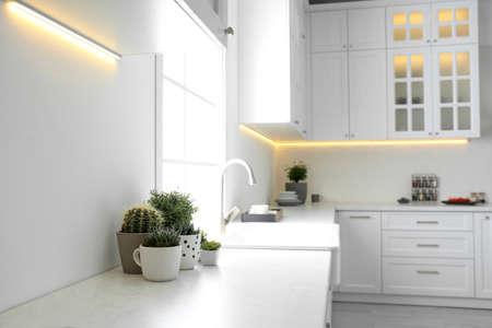 Beautiful houseplants near sink in stylish kitchen interior