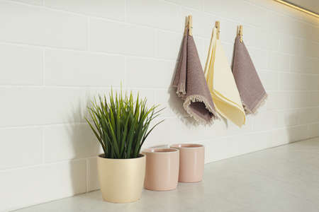 Beautiful houseplant, cups and kitchen towels indoors
