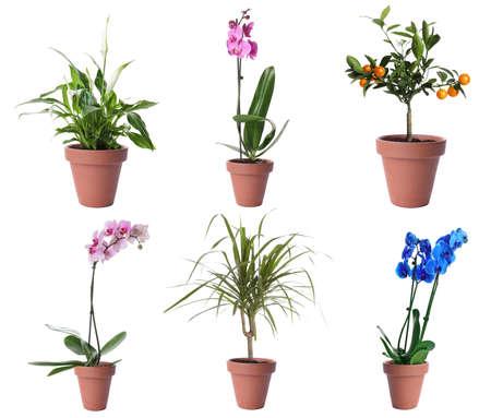 Set of different houseplants in flower pots on white background Zdjęcie Seryjne
