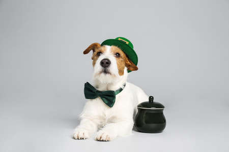 Jack Russell terrier with leprechaun hat, bow tie and pot on light grey background. St. Patrick's Day