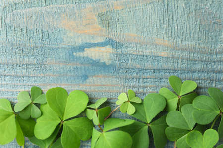 Clover leaves on blue wooden table, flat lay with space for text. St. Patrick's Day symbol