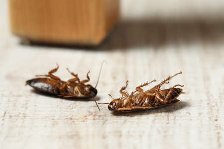 Dead brown cockroaches on white wooden background, closeup. Pest control