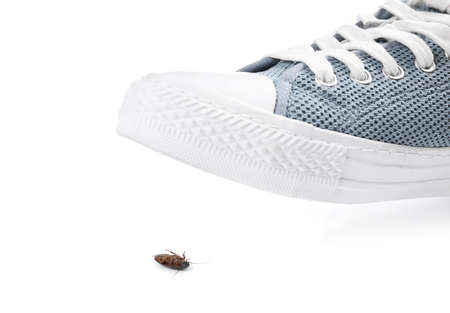 Person crushing cockroach with feet on white background, closeup. Pest control