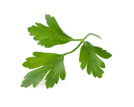 Aromatic fresh green parsley isolated on white Stock Photo