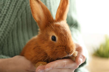 Young woman with adorable rabbit indoors, closeup. Lovely pet Imagens