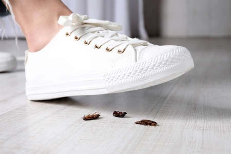 Woman crushing cockroaches with feet, closeup. Pest control