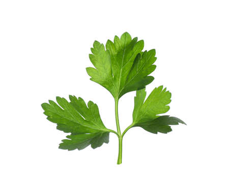 Aromatic fresh green parsley isolated on white