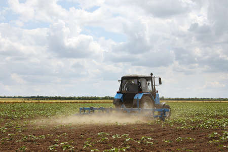 Modern tractor cultivating field of ripening sunflowers. Agricultural industry Standard-Bild