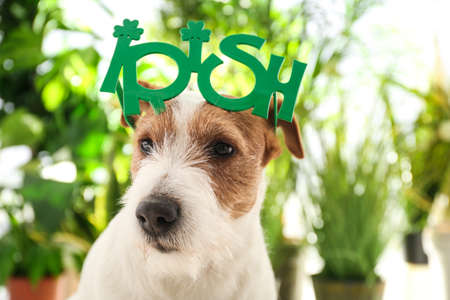 Jack Russell terrier with Irish party glasses outdoors. St. Patrick's Day