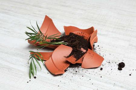 Broken terracotta flower pot with soil and plant on white wooden floor 写真素材