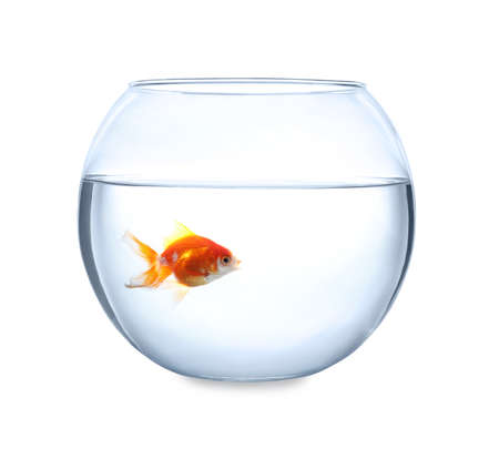 Beautiful bright small goldfish in round glass aquarium isolated on white Banque d'images