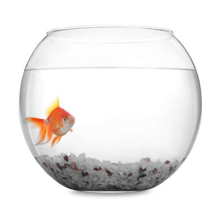 Beautiful bright small goldfish in round glass aquarium isolated on white Standard-Bild