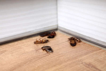 Cockroaches on wooden floor in corner, closeup. Pest control 写真素材