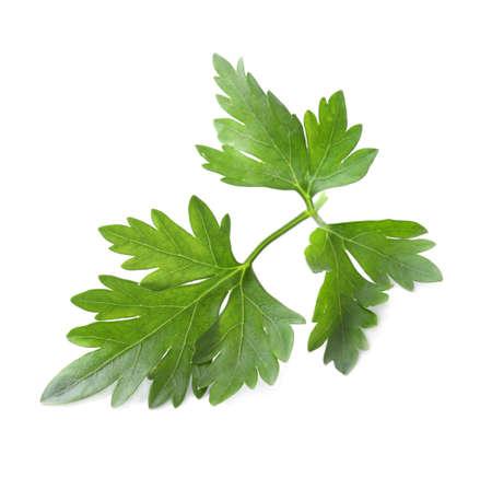 Fresh green organic parsley isolated on white