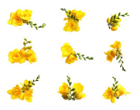 Set of yellow freesia flowers on white background