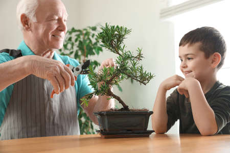 Senior man with little grandson taking care of Japanese bonsai plant indoors. Creating zen atmosphere at home Reklamní fotografie - 151149647