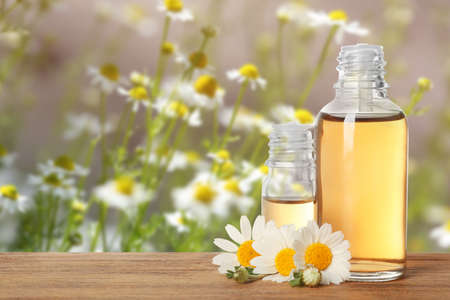 Bottles of essential oil and chamomile flowers on wooden table against blurred background. Space for text