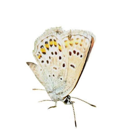 Beautiful bright butterfly flying on white background 免版税图像