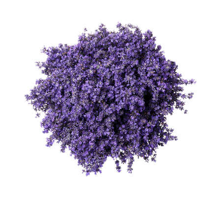 Beautiful lavender bouquet isolated on white, top view Standard-Bild
