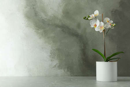 Artificial orchid plant in flower pot on light gray marble table. Space for text Stock Photo