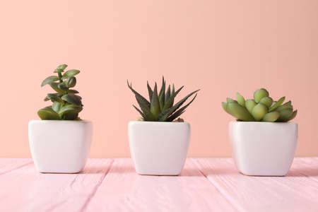 Artificial plants in white flower pots on pink wooden table Stock Photo