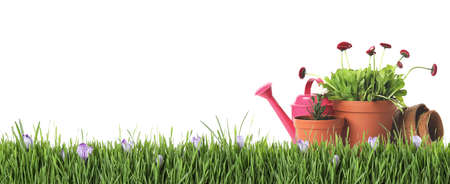 Potted blooming flowers and gardening tools on green grass against white background, space for text. Banner design Zdjęcie Seryjne
