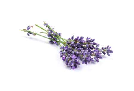 Beautiful blooming lavender flowers on white background Stock Photo