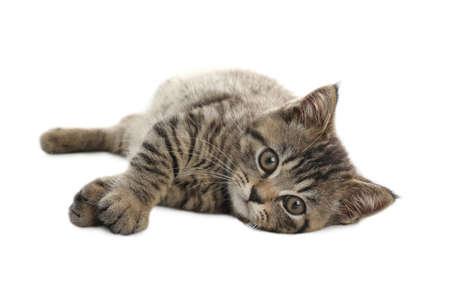 Cute tabby kitten on white background. Baby animal