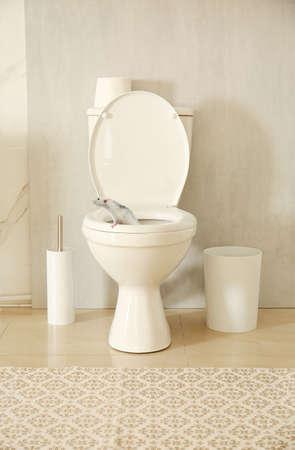 Rat on toilet bowl in light bathroom